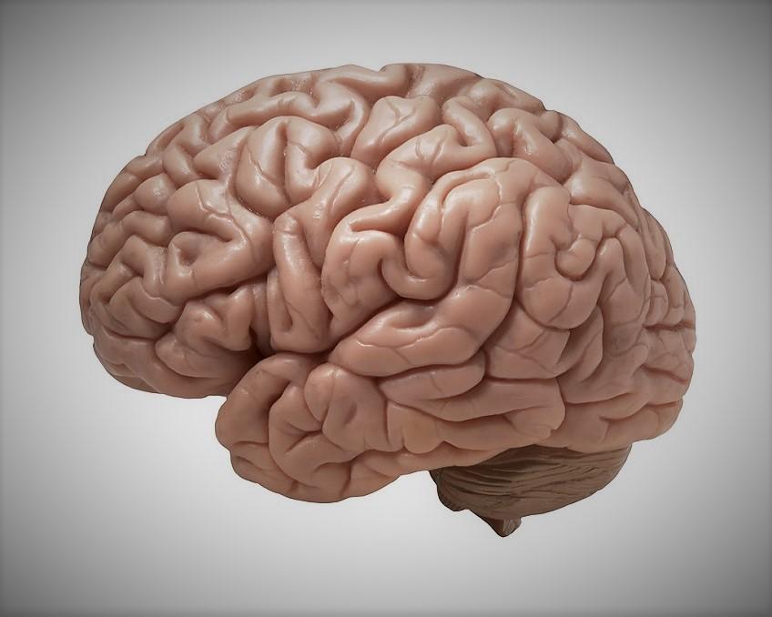 cortex-migraine